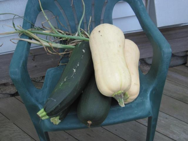 Some of Rose's massive squashs from her garden