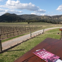 Flying away to Mudgee: dumplings, wines and a hangar house.