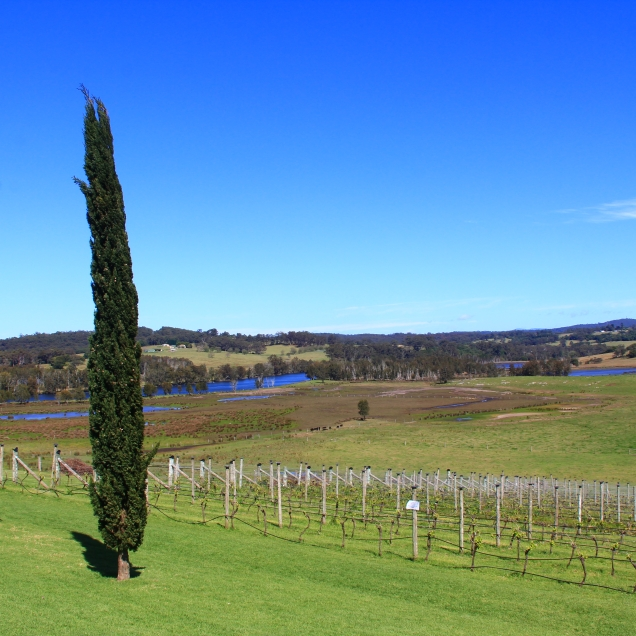 Cupitt Vineyards, Milton, NSW